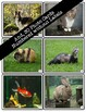 Pets Vocabulary Flashcards
