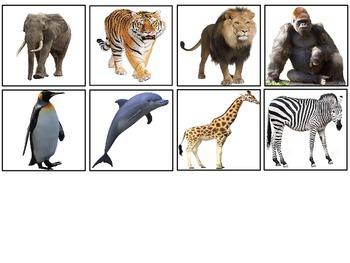 Pets vs. Zoo Animals