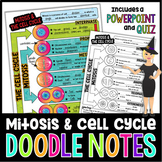 PHASES OF MITOSIS SCIENCE DOODLE NOTES, INTERACTIVE NOTEBOOK, MINI ANCHOR CHART