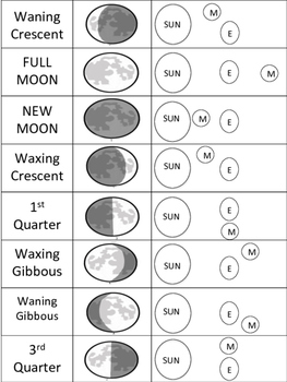 Phases of the Moon Fill-in, and Card Sort