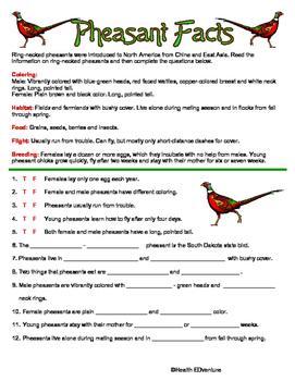 Pheasant Facts