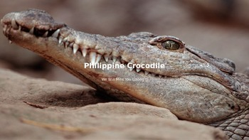 Philippine Crocodile - Power Point - Endangered Facts Information Pictures