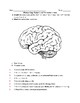Phineas Gage- Broca's and Wernicke's Area Worksheet