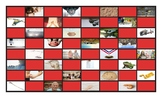 Phonics Final Consonant Clusters mp-nd-ld-rd Photo Checkerboard Game