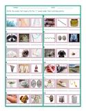 Phonics R Sound Photo Worksheet