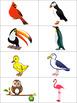 Phonology (Articulation) Velar K Sound /Oral Language-Beak, No Beak
