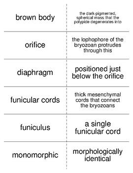 Phoronids, Brachiopods, and Bryozoans Flash Cards for Invertebrate Biology