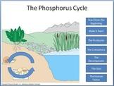 Phosphorus Cycle tutorial