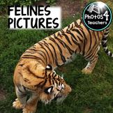 Photo 4 Teaching: FELINES
