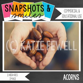 Photo: Acorns: 1 high res image