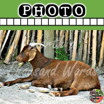 Photo: African Goat