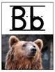 Photo - Alphabet Posters