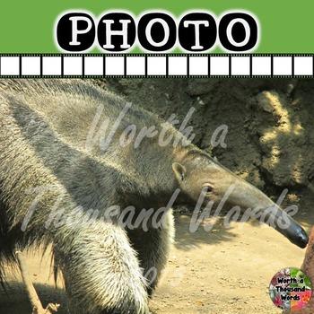 Photo: Anteater