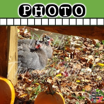 Photo: Autumn Pheasants