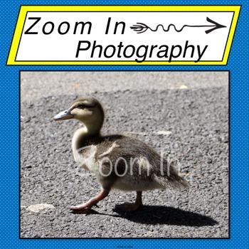 Stock Photo: Baby Duck