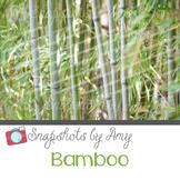 Photo: Bamboo