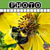 Photo: Bee Gathering Pollen