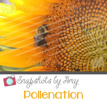 Photo: Bee and Sunflower {Pollenation}