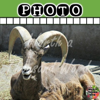 Photo: Big Horn Sheep