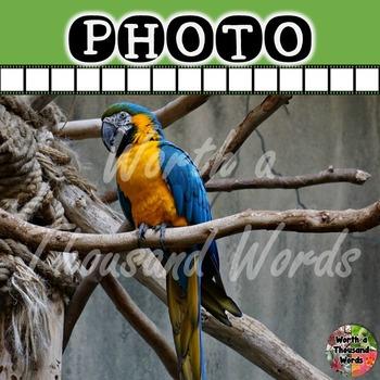 Photo: Blue Macaw