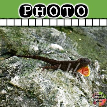 Photo: Brown Anole Lizard