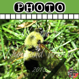 Photo: Bumble Bee