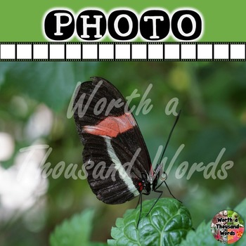 Photo: Butterfly - Black and Red