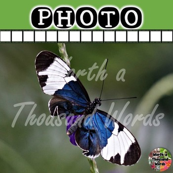 Photo: Butterfly - Blue and White