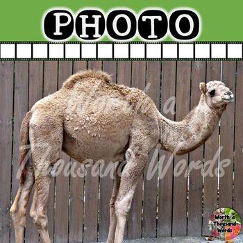 Photo: Camel