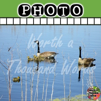 Photo: Canada Geese and Goslings