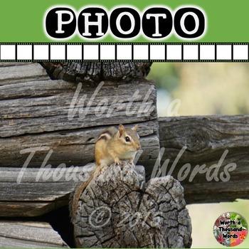 Photo: Chipmunk