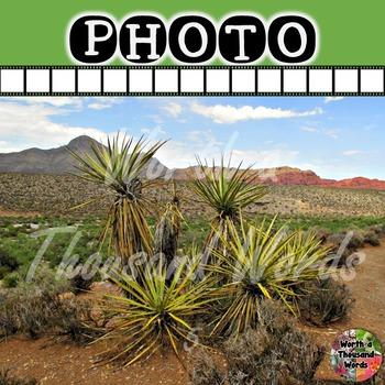 Photo: Desert - Mojave Yucca