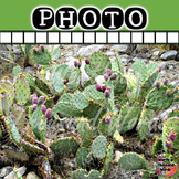 Photo: Desert - Prickly Pear