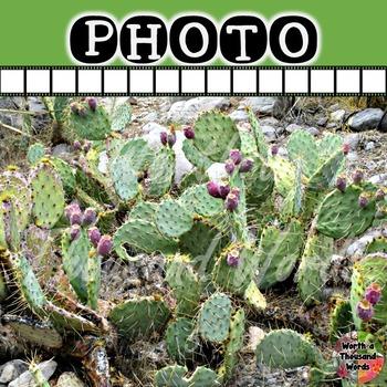 Photo: Desert - Prickly Pear