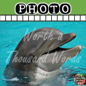 Photo: Dolphin