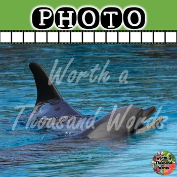 Photo: Dolphin - Dorsal Fin