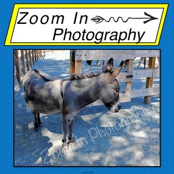 Stock Photo: Donkey