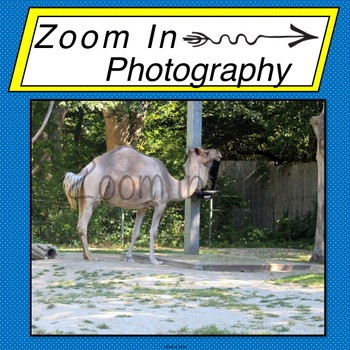 Stock Photo: Dromedary Camel