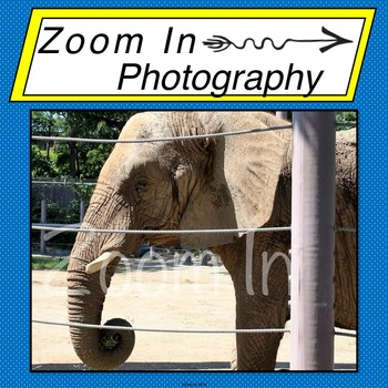 Stock Photo: Elephant (a)