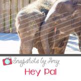 Photo: Elephants