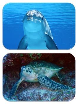 Photo Find!  Ocean