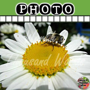 Photo: Fly Pollination