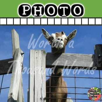 Photo: Goat