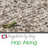 Photo: Grasshopper