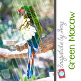 Photo: Green Macaw