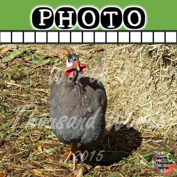 Photo: Guinea Fowl