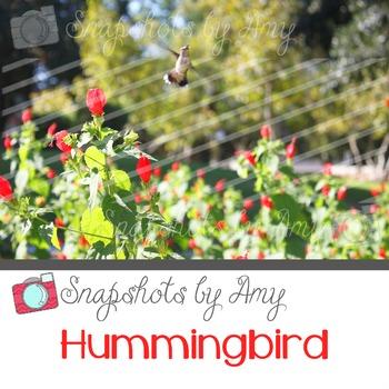 Photo: Hummingbird