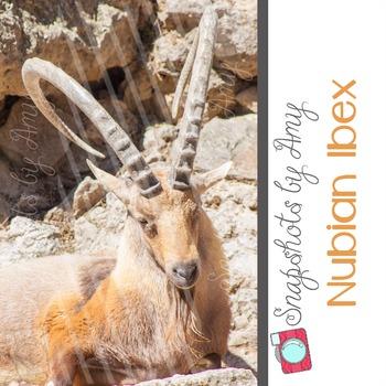 Photo: Ibex