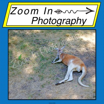 Stock Photo: Kangaroo