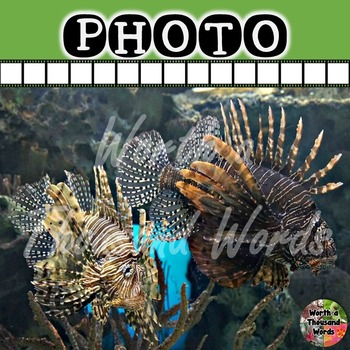 Photo: Lion Fish